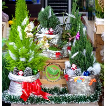 Trang Trí Noel | Quà Tặng Giáng Sinh