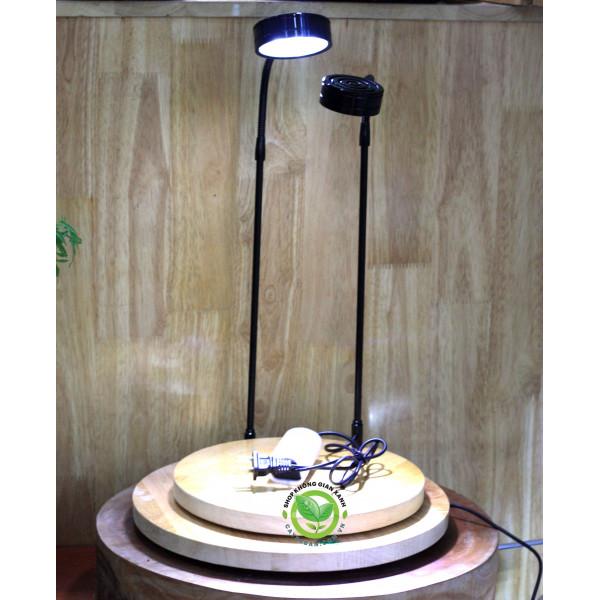 Đèn Led đế gỗ cho terrarium