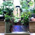 Terrarium Hồ Bán cạn 40cm