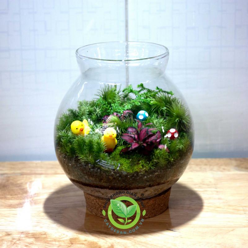 Terrarium Moss Nắp gỗ