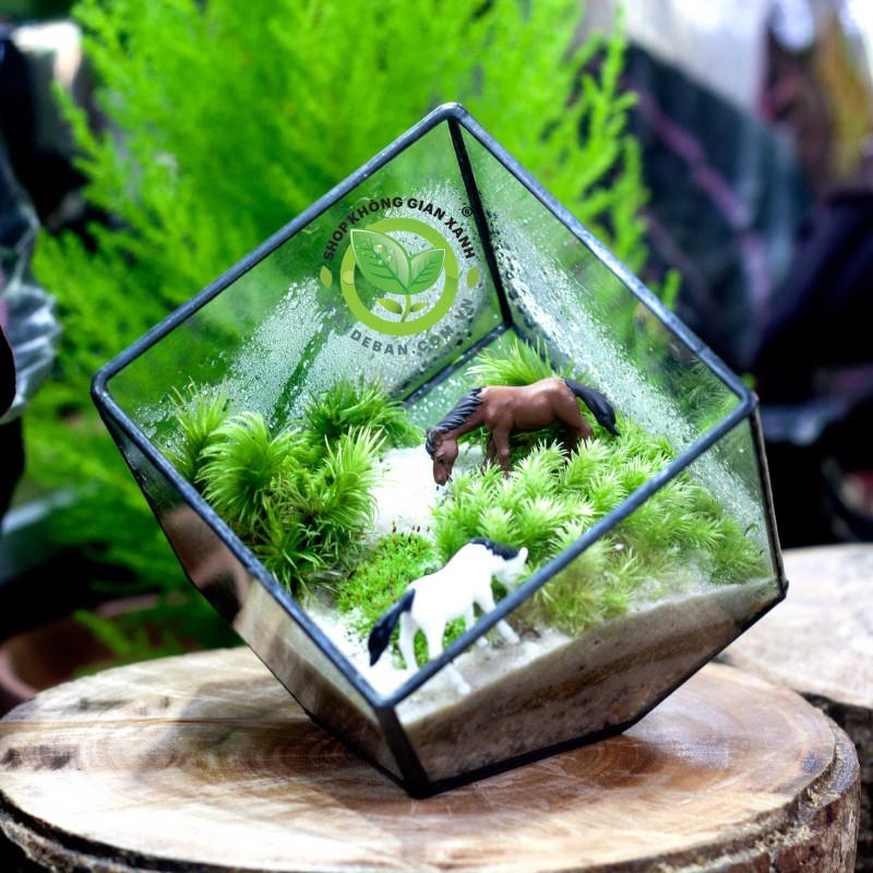 Terrarium Moss Đa Giác Vuông 10cm