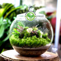 Terrarium Moss 15