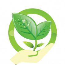 Cách chăm sóc các loại cây không khí | Tillandsia