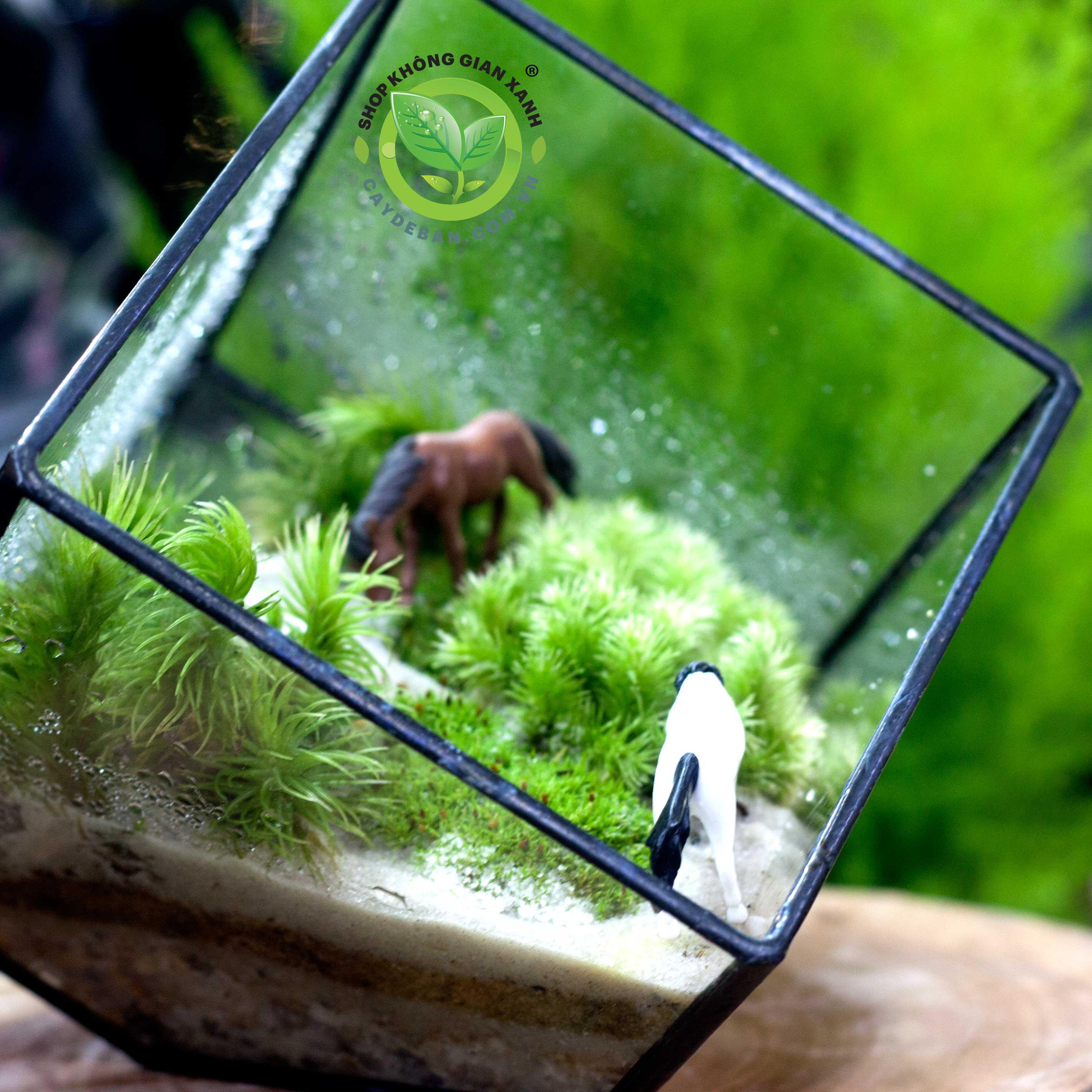 terrarium-da-giac-vuong10
